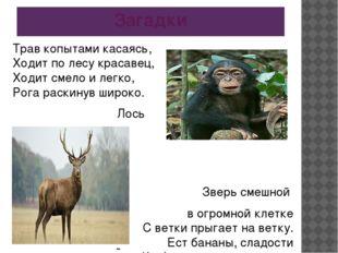 Загадки Трав копытами касаясь, Ходит по лесу красавец, Ходит смело и легко, Р
