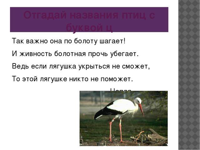 Отгадай названия птиц с буквой ц Так важно она по болоту шагает! И живность б...