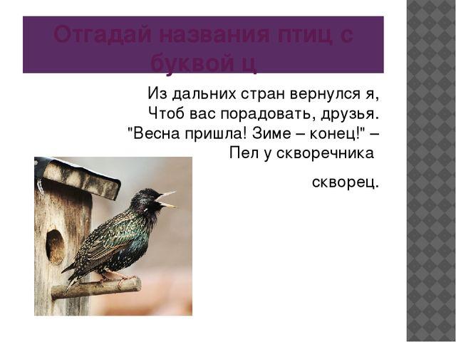 Отгадай названия птиц с буквой ц Из дальних стран вернулся я, Чтоб вас порадо...