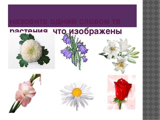 назовите одним словом те растения, что изображены
