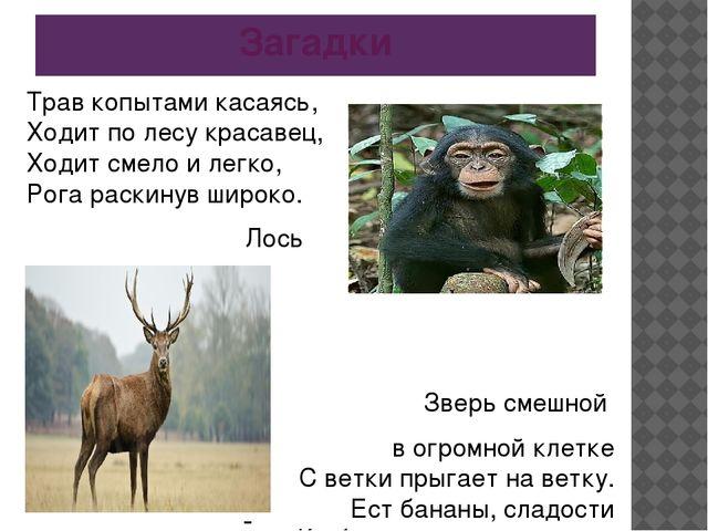 Загадки Трав копытами касаясь, Ходит по лесу красавец, Ходит смело и легко, Р...
