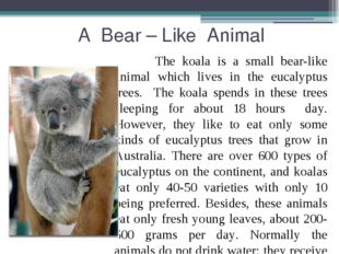 A Bear – Like Animal The koala is a small bear-like animal which lives in th