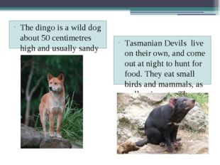 The dingo is a wild dog about 50 centimetres high and usually sandy – colour