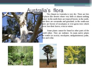 Australia's flora The climate in Australia is very dry. There are lots of pl