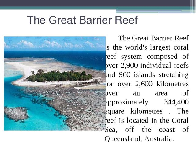 The Great Barrier Reef The Great Barrier Reef is the world's largest coral r...