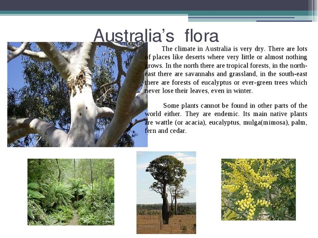 Australia's flora The climate in Australia is very dry. There are lots of pl...
