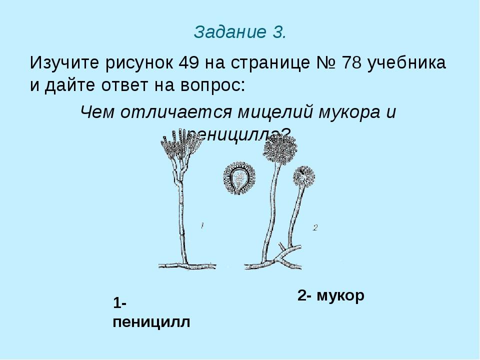 Задание 3. Изучите рисунок 49 на странице № 78 учебника и дайте ответ на вопр...