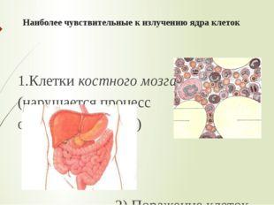 Наиболее чувствительные к излучению ядра клеток 1.Клетки костного мозга (нару