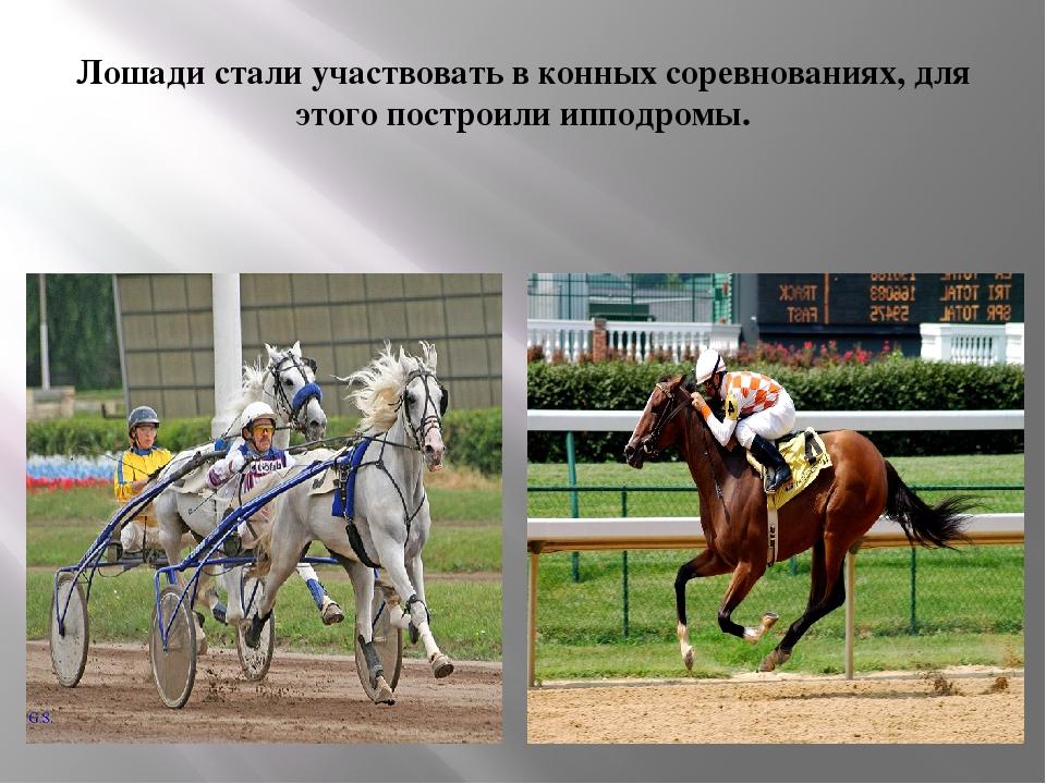 сленгом называют картинка польза лошади для человека тем, кому хватает