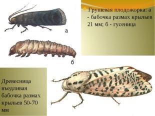 Грушевая плодожорка: а - бабочка размах крыльев 21 мм; б - гусеница Древесниц