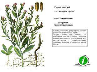 Карантинный сорняк, распространен в южных районах европейской части страны. З