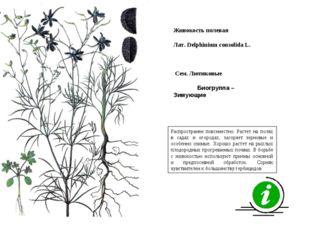 Распространен повсеместно. Растет на полях в садах и огородах, засоряет зерно