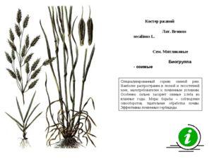 Специализированный сорняк озимой ржи. Наиболее распространен в лесной и лесос