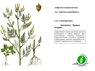 Карантинное сорное растение. Широко встречается в южных районах. Для уничтоже