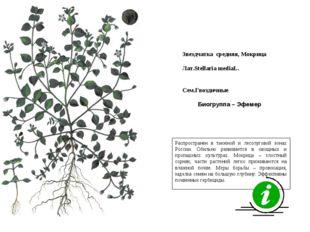 Распространен в таежной и лесолуговой зонах России. Обильно развивается в ово