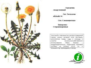 Злостный и повсеместно распространенный сорняк, сильно засоряет луга, пастбищ