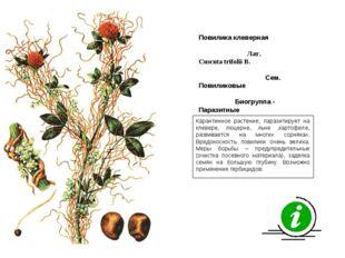 Карантинное растение, паразитирует на клевере, люцерне, льне ,картофеле, разв