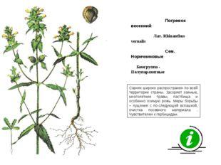 Сорняк широко распространен по всей территории страны. Засоряет озимые, много