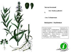 Распространен повсеместно, предпочитает плодородные увлажненные почвы. Сильно