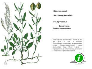 Распространен повсеместно. Растет на по-лях, лугах, в садах и огородах. Предп