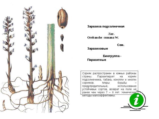 Сорняк распространен в южных районах страны. Паразитирует на корнях подсолнеч...