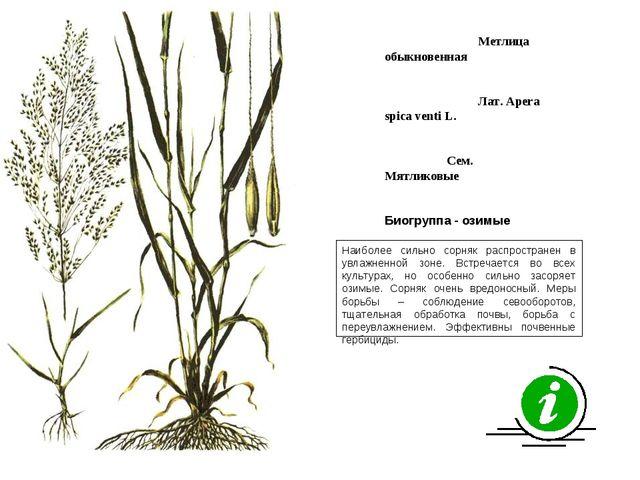 Наиболее сильно сорняк распространен в увлажненной зоне. Встречается во всех...