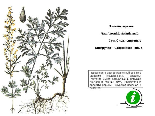 Повсеместно распространенный сорняк с широким экологическим ареалом. Растение...