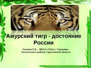 Амурский тигр - достояние России Улитина Е.В. – МБОУ «СОШ с. Терновка» Энгель