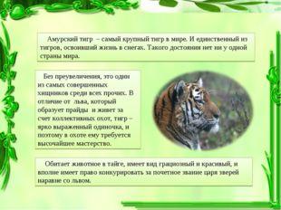 Амурский тигр – самый крупный тигр в мире. И единственный из тигров, освоивш