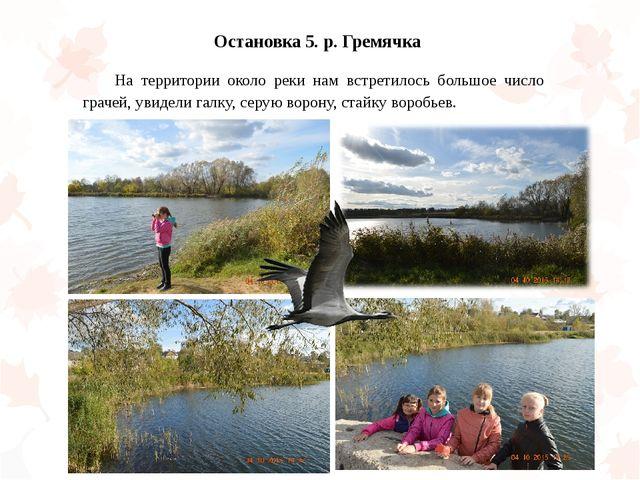 Остановка 5. р. Гремячка На территории около реки нам встретилось большое чи...
