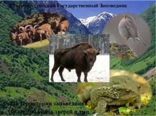 На территории заповедника более 300 видов зверей и тиц. Северо-Осетинский Го