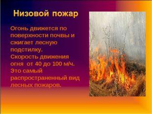 Огонь движется по поверхности почвы и сжигает лесную подстилку. Скорость движ