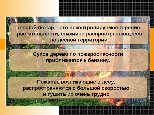 Лесной пожар – это неконтролируемое горение растительности, стихийно распрос...