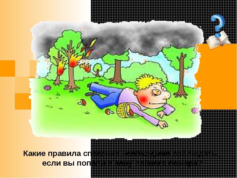 Какие правила спасения необходимо соблюдать , если вы попали в зону лесного п...
