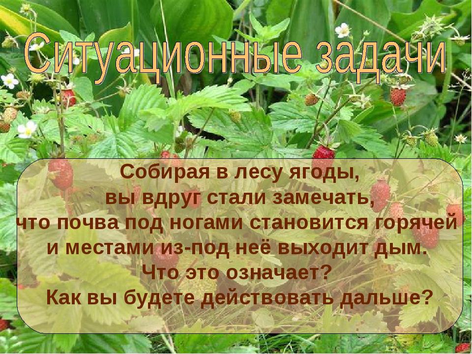 Собирая в лесу ягоды, вы вдруг стали замечать, что почва под ногами становитс...