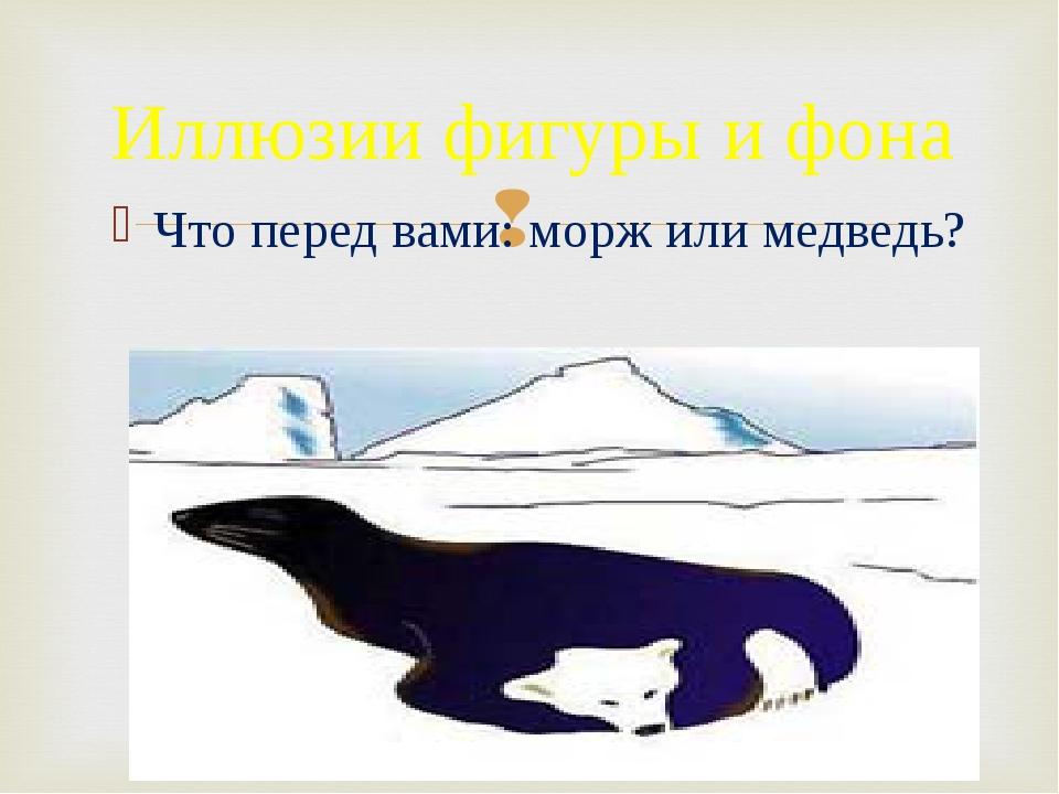 Что перед вами: морж или медведь? Иллюзии фигуры и фона