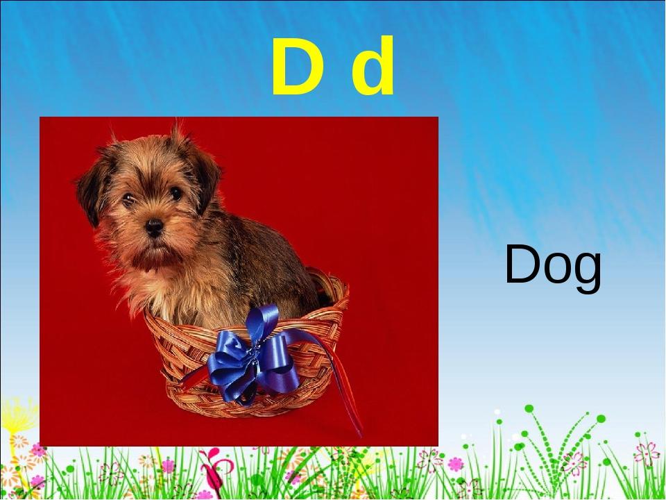 D d Dog
