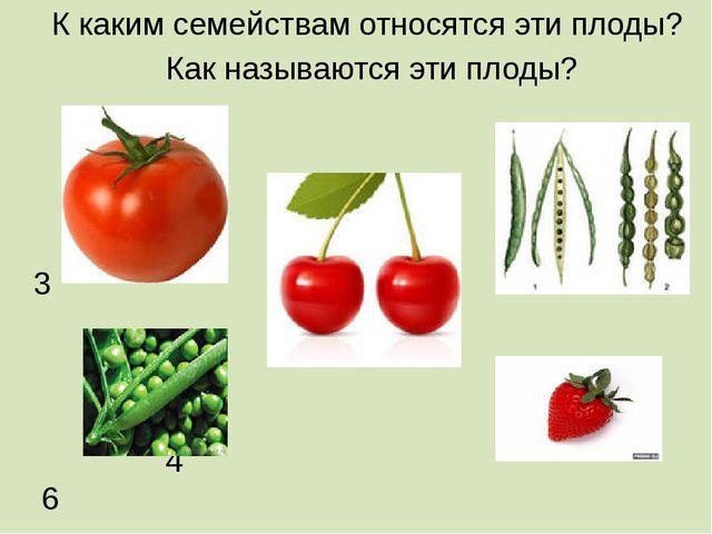 К каким семействам относятся эти плоды? Как называются эти плоды? 1 3 2 4 6