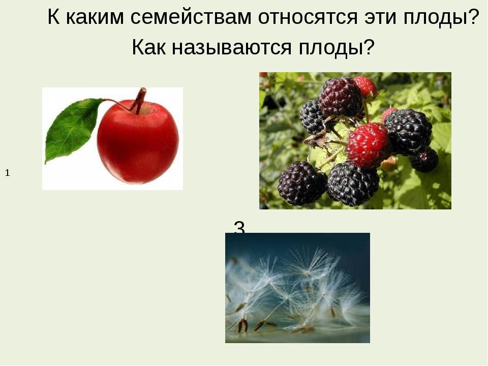 К каким семействам относятся эти плоды? Как называются плоды? 2 3