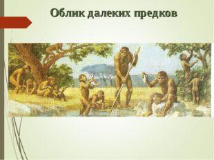 Облик далеких предков
