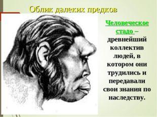 Облик далеких предков Человеческое стадо – древнейший коллектив людей, в кото