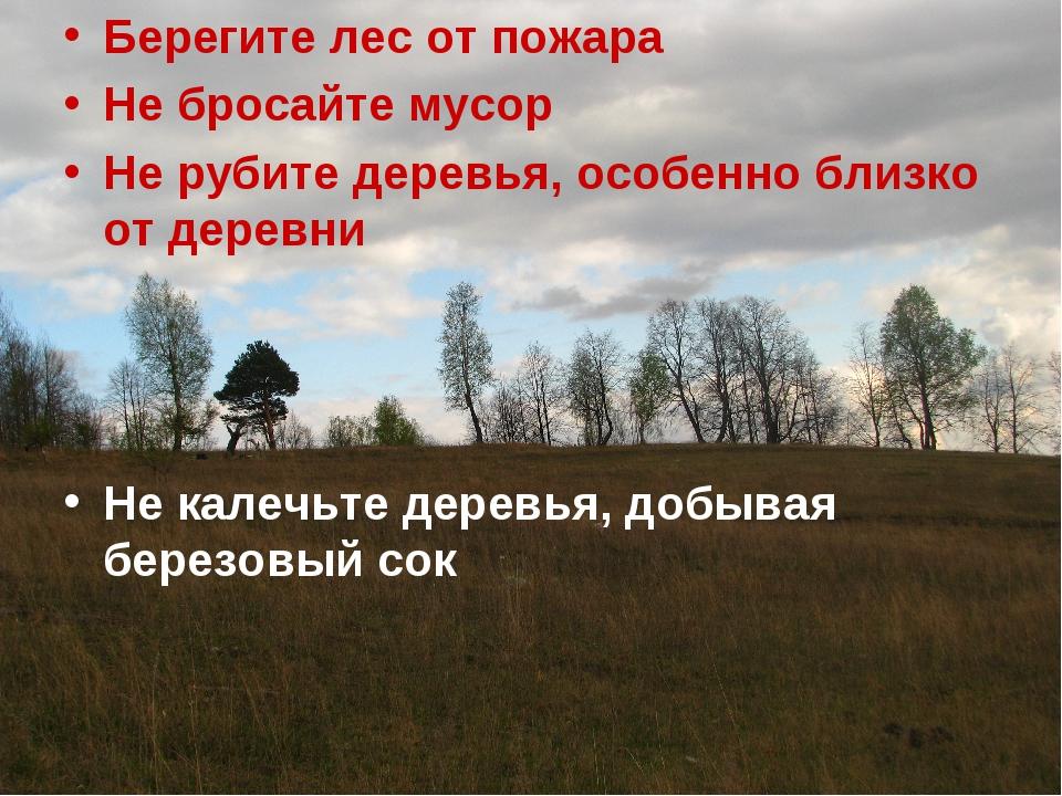Берегите лес от пожара Не бросайте мусор Не рубите деревья, особенно близко о...