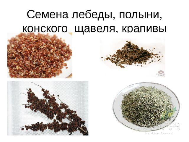 Семена лебеды, полыни, конского щавеля, крапивы