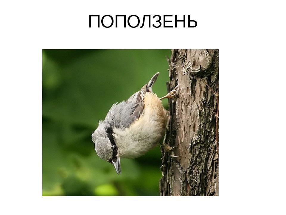 ПОПОЛЗЕНЬ