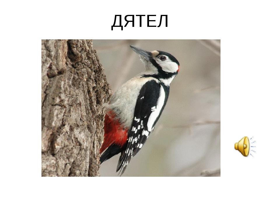 ДЯТЕЛ