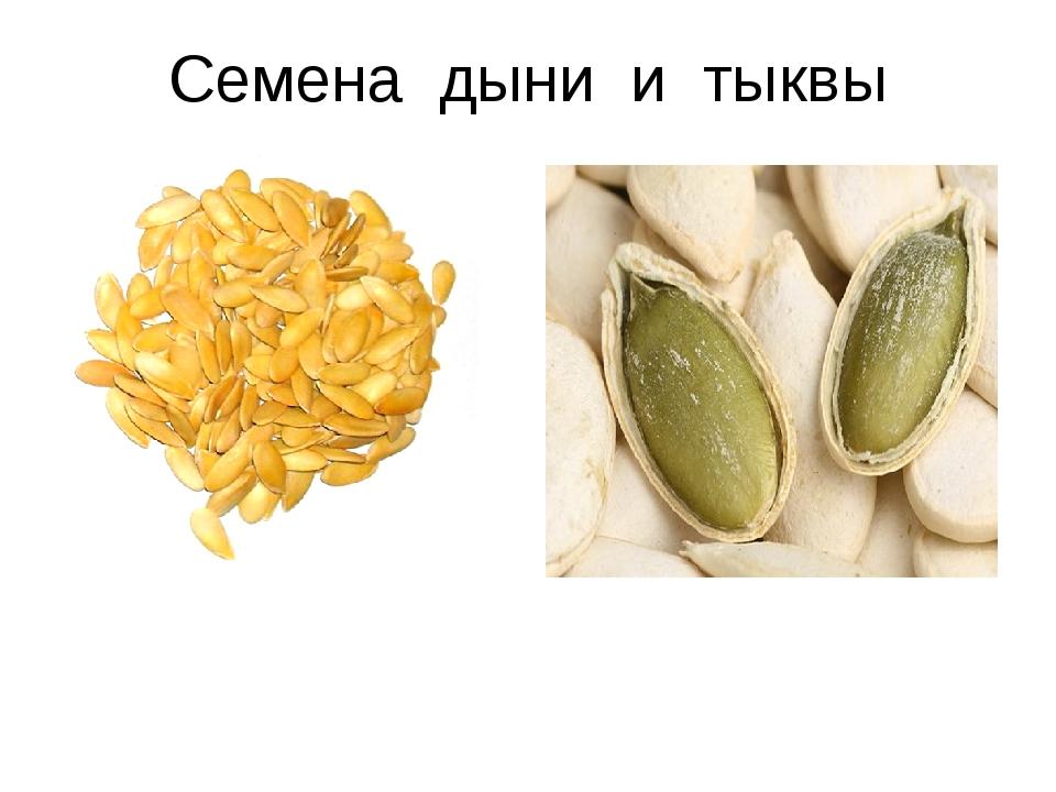 Семена дыни и тыквы