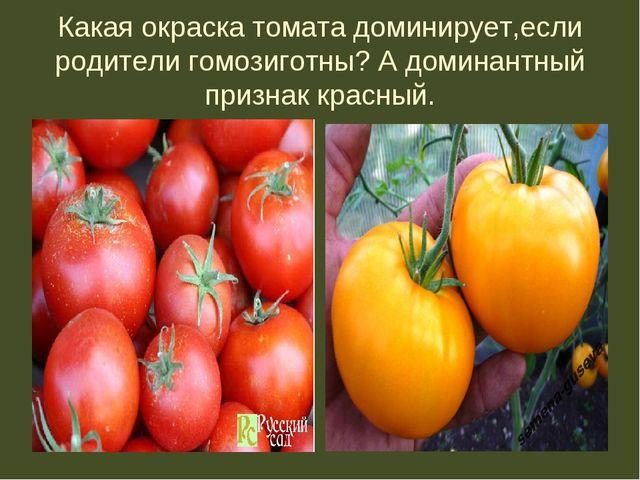 Какая окраска томата доминирует,если родители гомозиготны? А доминантный приз...