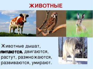 ЖИВОТНЫЕ Животные дышат, питаются, двигаются, растут, размножаются, развивают
