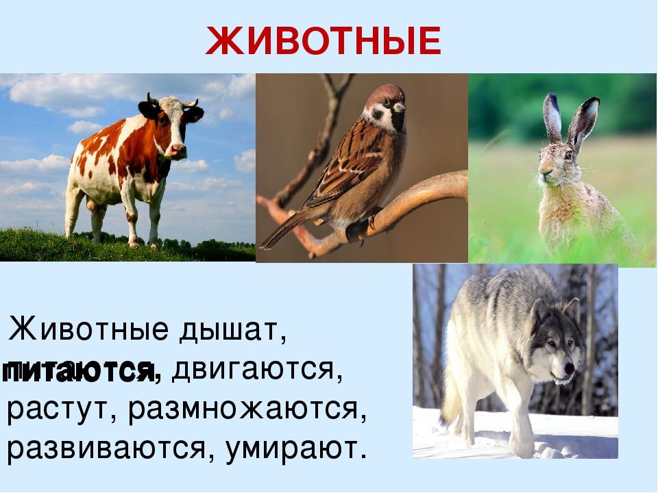 ЖИВОТНЫЕ Животные дышат, питаются, двигаются, растут, размножаются, развивают...