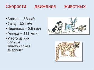 Скорости движения животных: Борзая – 58 км/ч Заяц – 60 км/ч Черепаха – 0,5 км